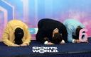 [SW포토] 김종국-유세윤-이특, 새해 인사